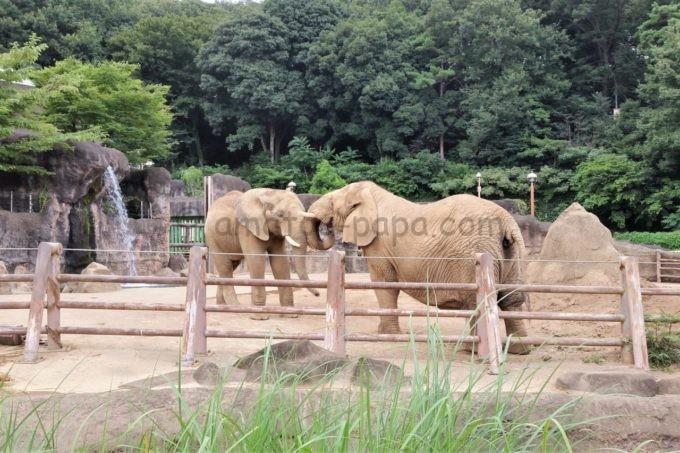 多摩動物公園のゾウ
