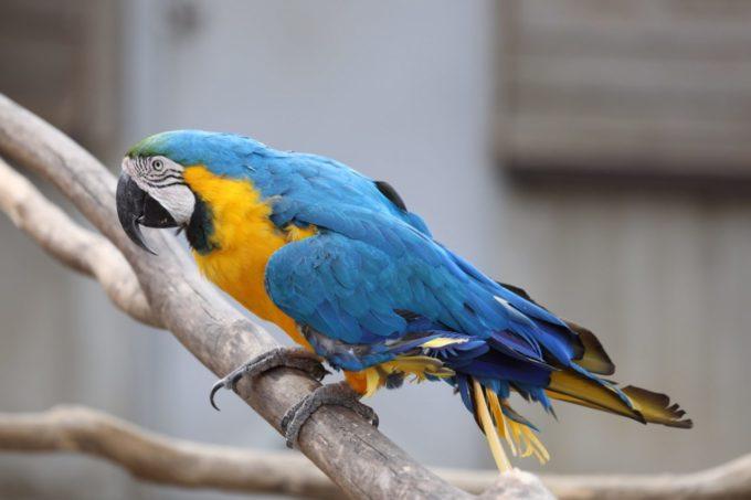 千葉市動物公園のインコ