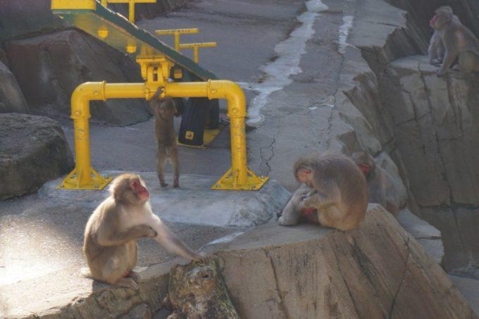 福岡市動植物園のサル