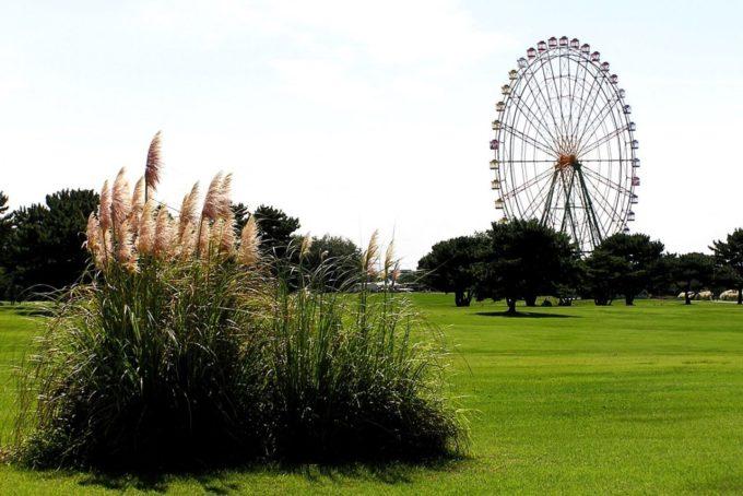 国営ひたち海浜公園の大草原と観覧車