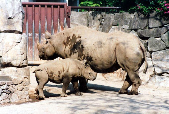 金沢動物園のサイ