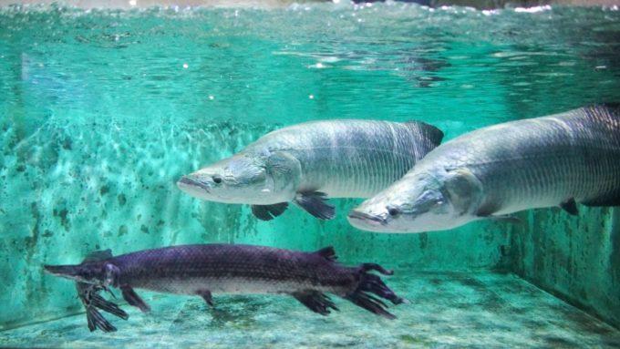 登別マリンパークニクスの魚