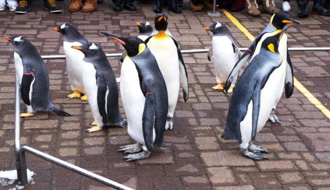 登別マリンパークニクスのペンギン