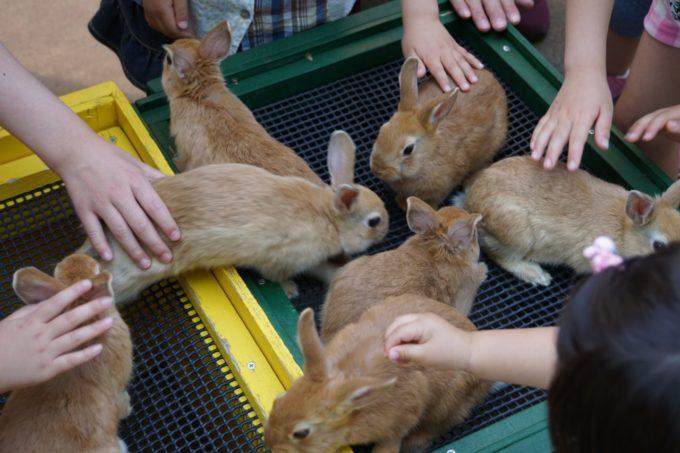 埼玉県こども動物自然公園のウサギ