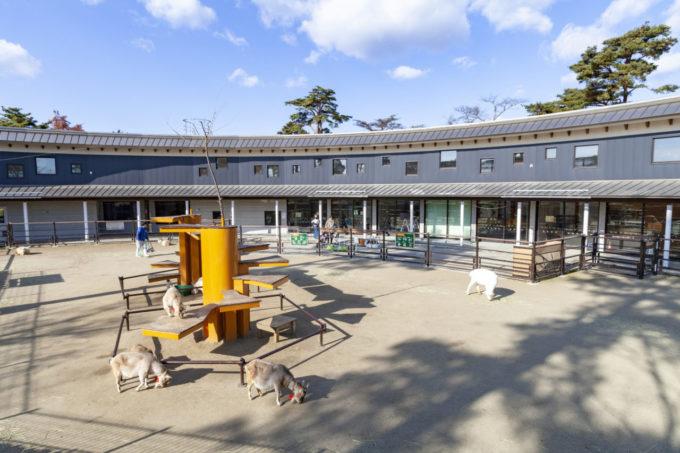 仙台市八木山動物公園のヤギ