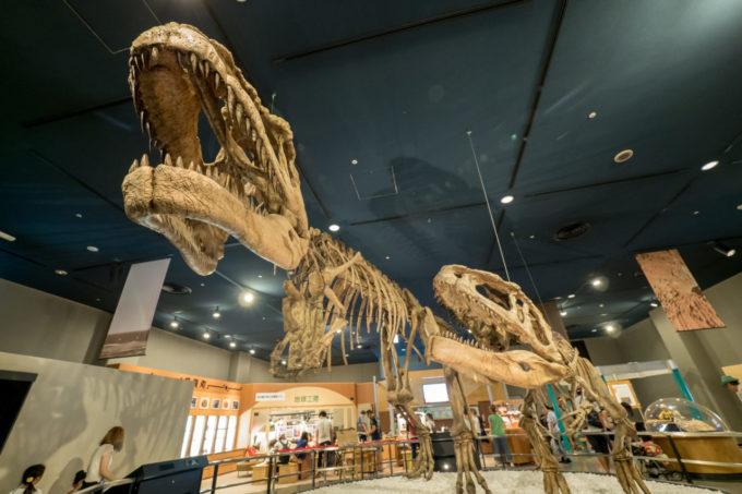 名古屋市博物館のティラノサウルスの化石
