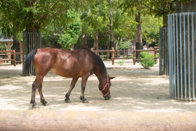 のんほいパーク(豊橋総合動植物公園)の馬