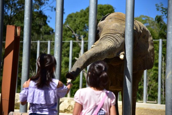 しろとり動物園のゾウ