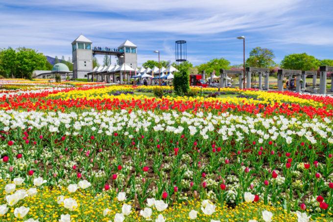 ぐんまフラワーパークの花とパークタワー