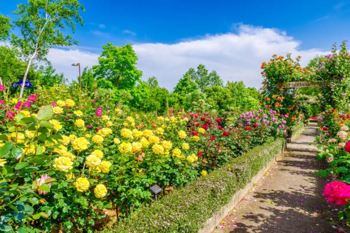 ぐんまフラワーパークの花