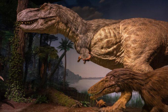 ミュージアムパーク茨城県自然博物館にある恐竜の標本