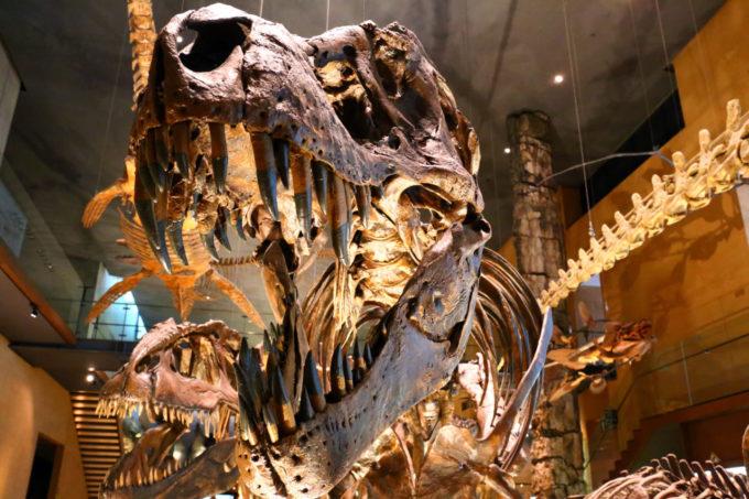 北九州市立いのちのたび博物館のティラノサウルスの化石