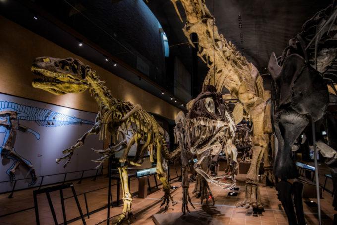 北九州市立いのちのたび博物館の雰囲気