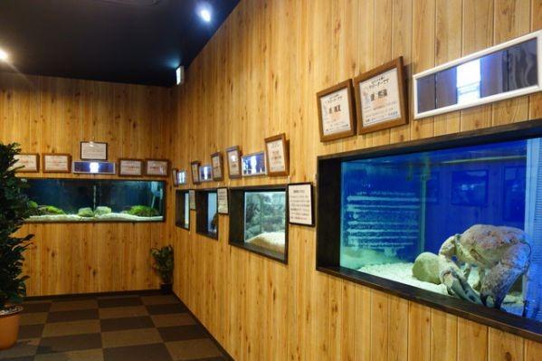 すさみ町立エビとカニの水族館の外国のエビやカニ