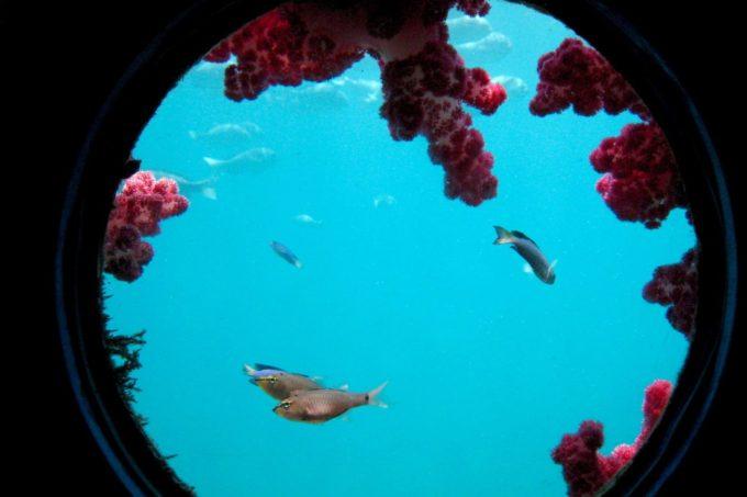 串本海中公園の魚