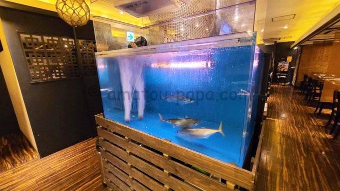 九州熱中屋のサバが泳いでいる水槽
