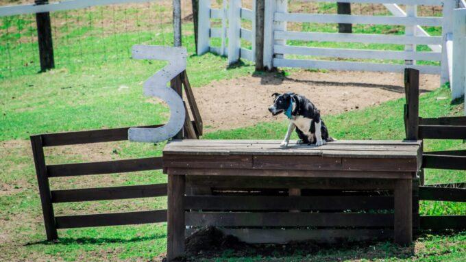 伊香保グリーン牧場の犬