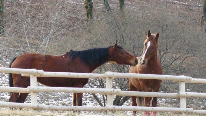 伊香保グリーン牧場の馬