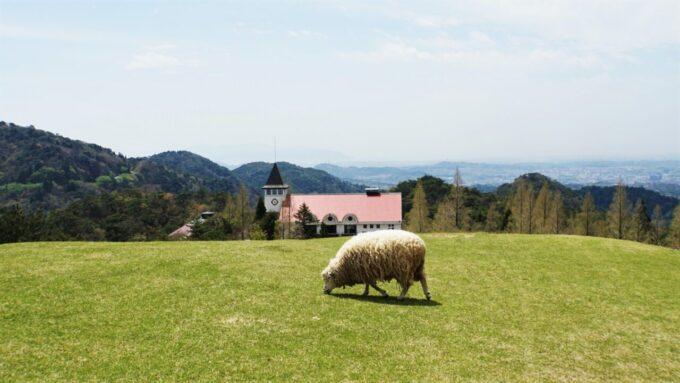 神戸市立六甲山牧場の羊