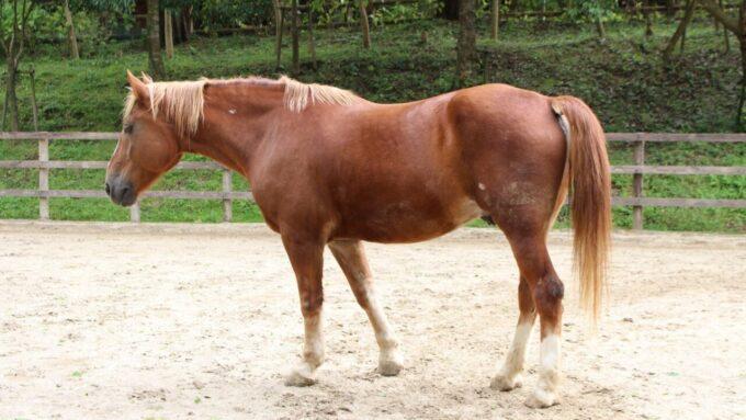 神戸市立六甲山牧場の馬