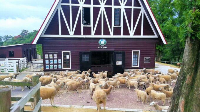 神戸市立六甲山牧場の羊とめん羊舎