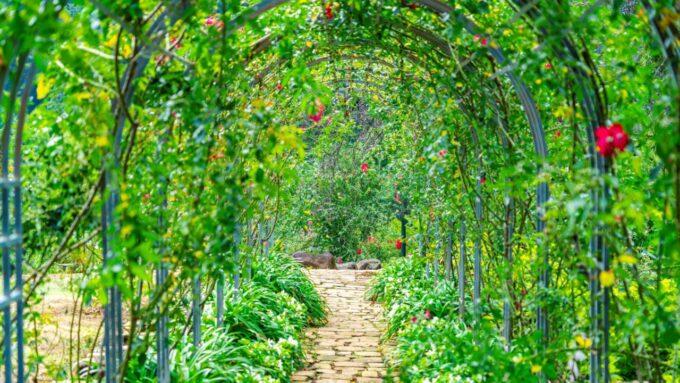 アカオハーブ&ローズガーデンの花のアーチ(トンネル)