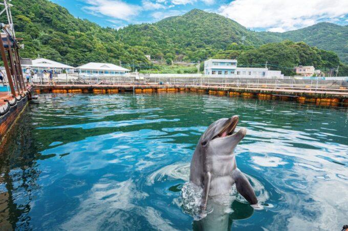 うみたま体験パーク「つくみイルカ島」のイルカ
