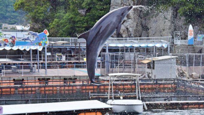 うみたま体験パーク「つくみイルカ島」のイルカのジャンプ